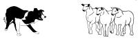 Gjeterhundkurs 26-27 januar, Birkebeineren Hestesenter